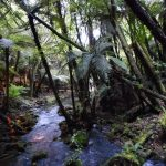 Rotorua 4